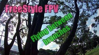 FPV Freestyle - contrôle du réglage et vol entre les branches